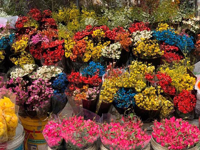 Hoa chơi Tết đẹp được bày bán tại các chợ hoa