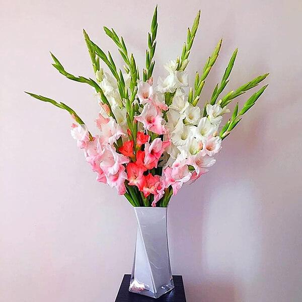 hoa Dơn (hoa Lay ơn) chơi tết đẹp
